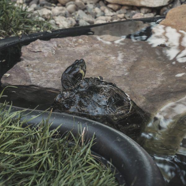 Teknősök a fűszerkertben